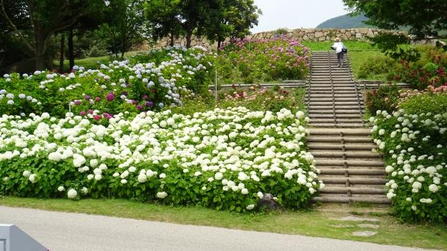 国営明石海峡公園9.JPG